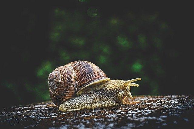 Snail eating flower pot.