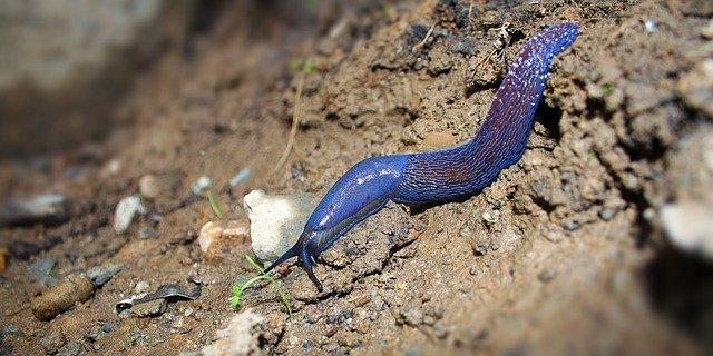 What plants do slugs eat?