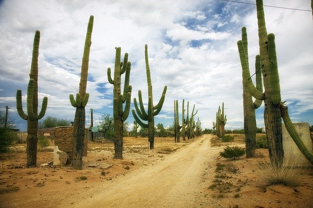 Cacti in the desert usually have pests.