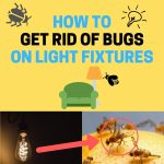 How to Get Rid of Tiny Flying Bugs on Light Fixtures (Naturally)