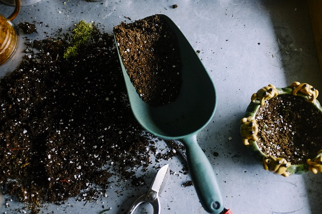 Fungus gnats on houseplant soil.