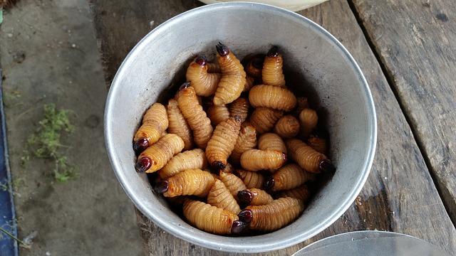 Housefly maggots.