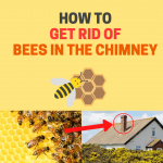 How to Get Rid of Bees in the Chimney (For Good)