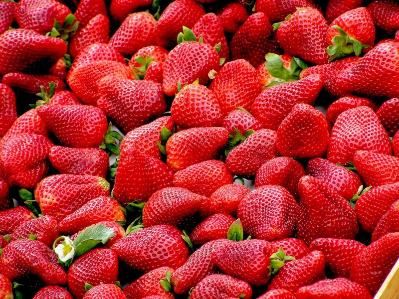 How to get rid of bugs on strawberry plants.