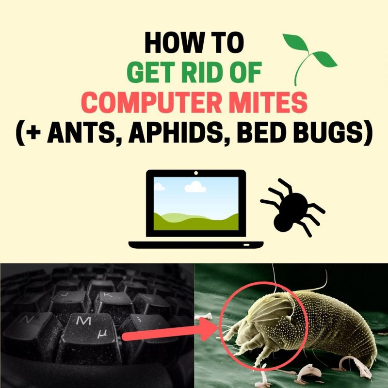 How to get rid of computer mites, ants, aphids, bed bugs, and other bugs in a laptop.