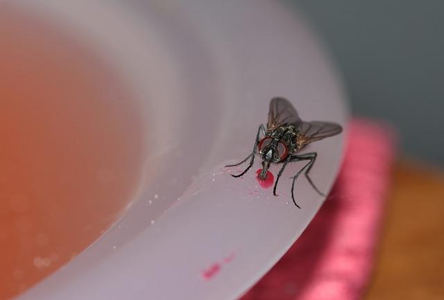 Kill housefly.