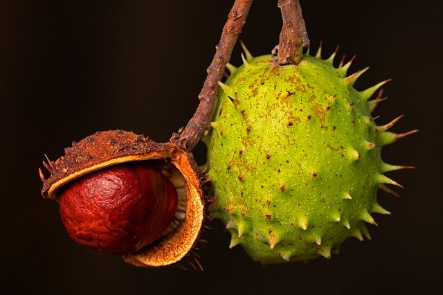 Chestnuts repel spiders without using poison.