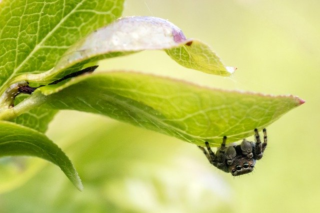 How to get rid of jumping spiders