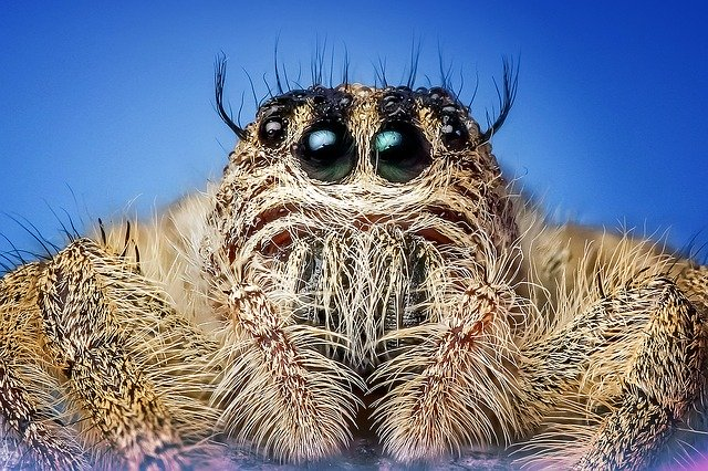 Jumping spider appearance.