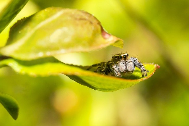 Jumping spiders outside.