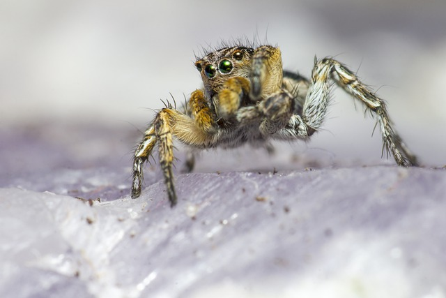 Stop jumping spiders.