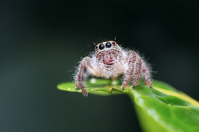 Jumping spider on plant.