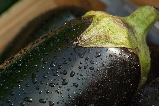 Flea beetles eating eggplant.