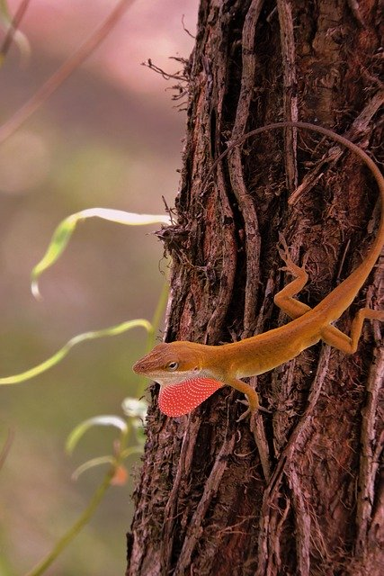 Green anole on tree.