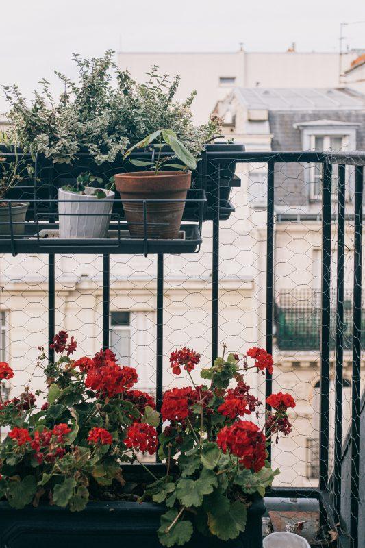 Bugs on balcony plants.