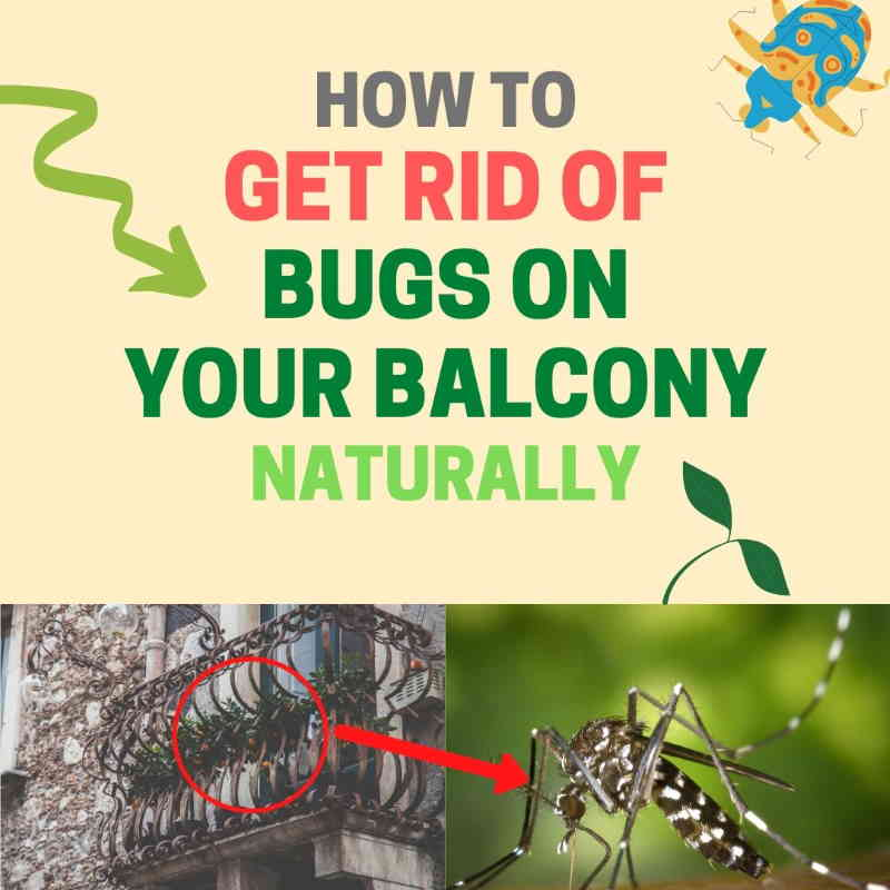 How to get rid of bugs on balcony.