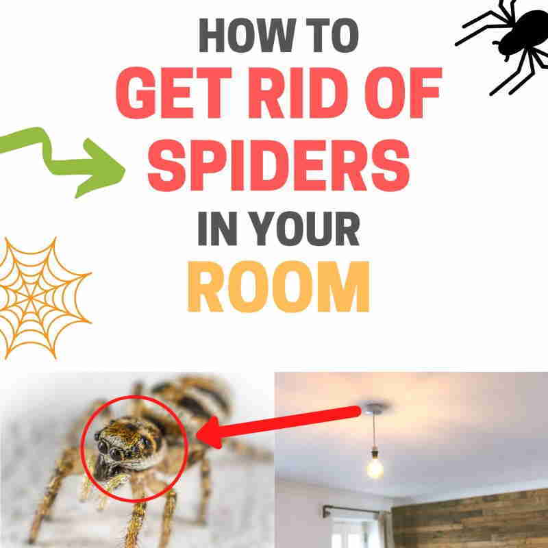 How to get rid of spiders in room.