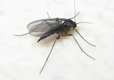 A fungus gnats on a litter box.