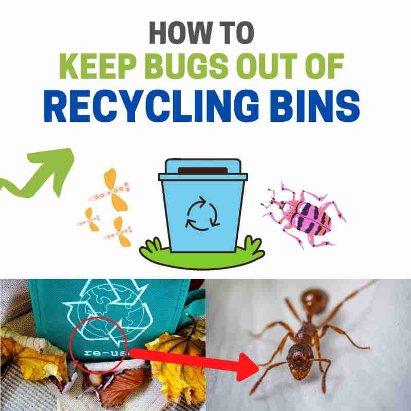 How to get rid of bugs in recycle containers,