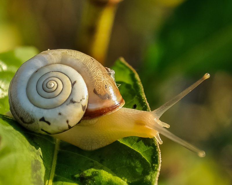 Snail eating cantaloupe.