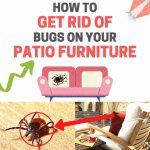 How to Get Rid of Bugs on Patio Furniture (Naturally)