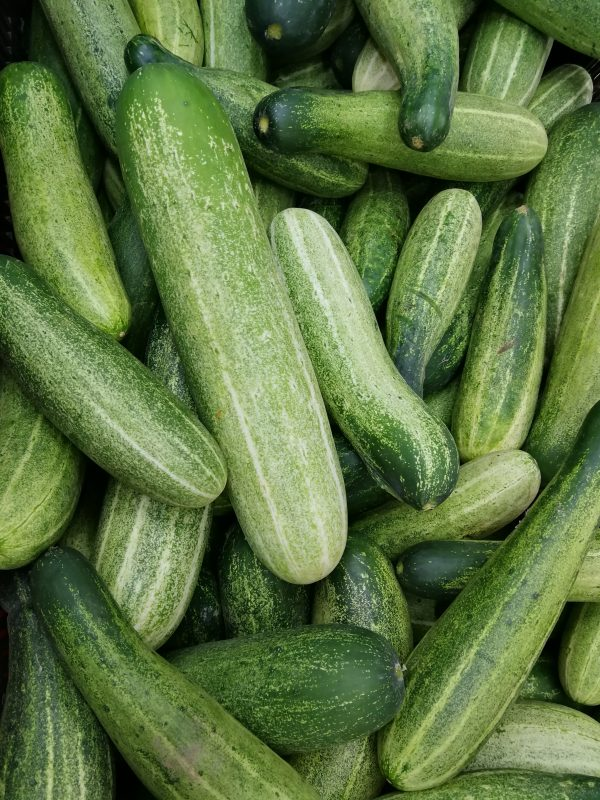 Fresh cucumbers free of pests.