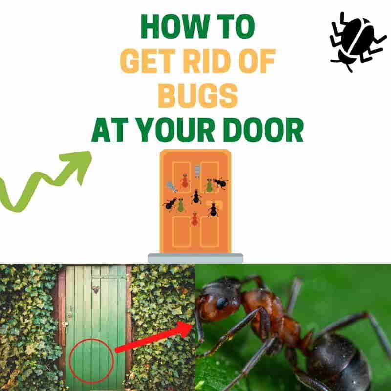 How to keep bugs away from front door DIY naturally