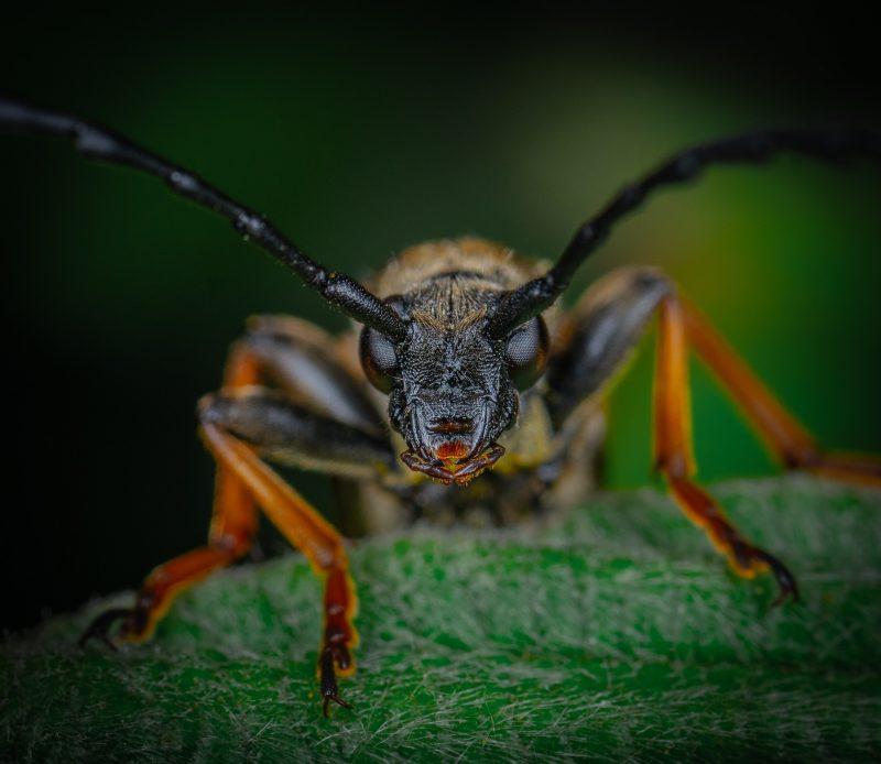 Leaf footed bug macro sho.
