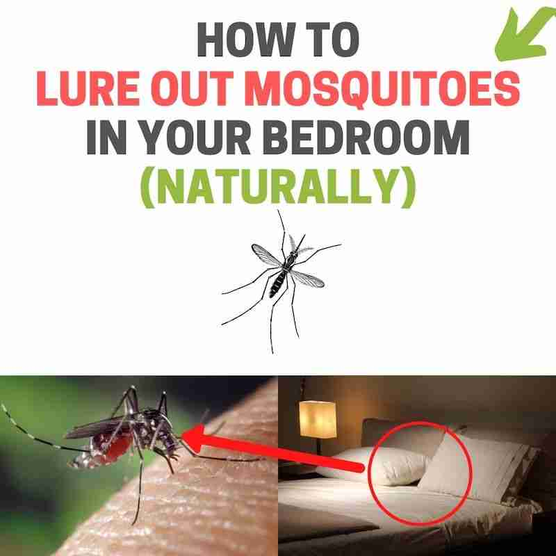 How to find hiding mosquito in your room.