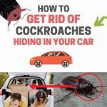 How to Get Rid of Cockroaches in Your Car Naturally (Fast and Easy)