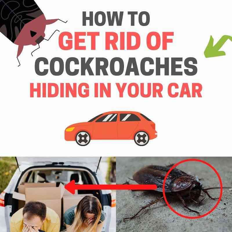 How to get rid of cockroaches in my car naturally home remedies DIY.