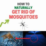 How to Get Rid of Mosquitoes Inside the House (Home Remedies)