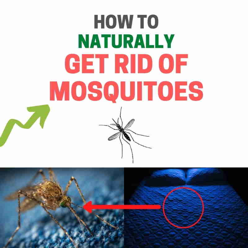 How to get rid of mosquitoes in the house naturally