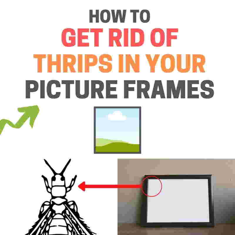 How to get rid of thrips in photo frames.