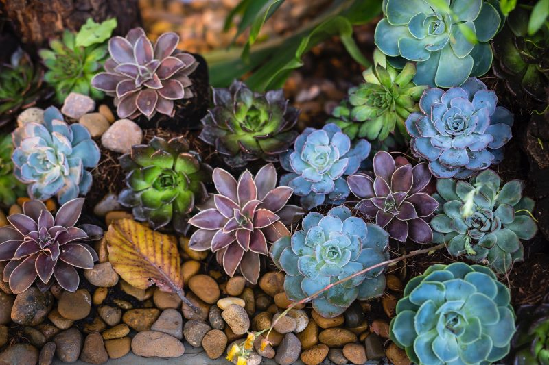 A bunch of succulents of all variations.