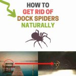 How to Get Rid of Dock Spiders Naturally (Save Your Boat!)