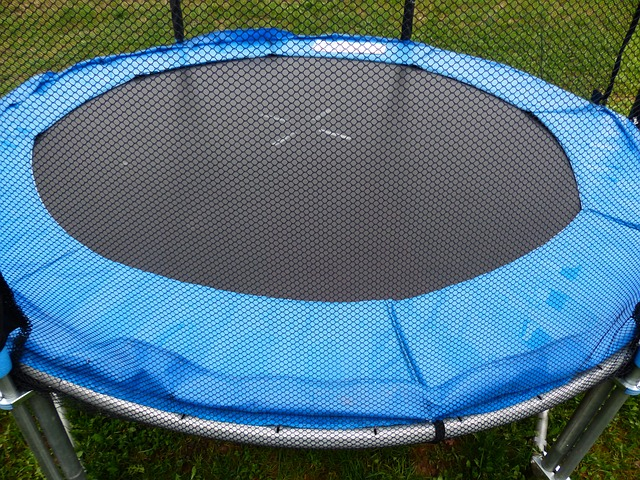 Bugs on trampoline netting.