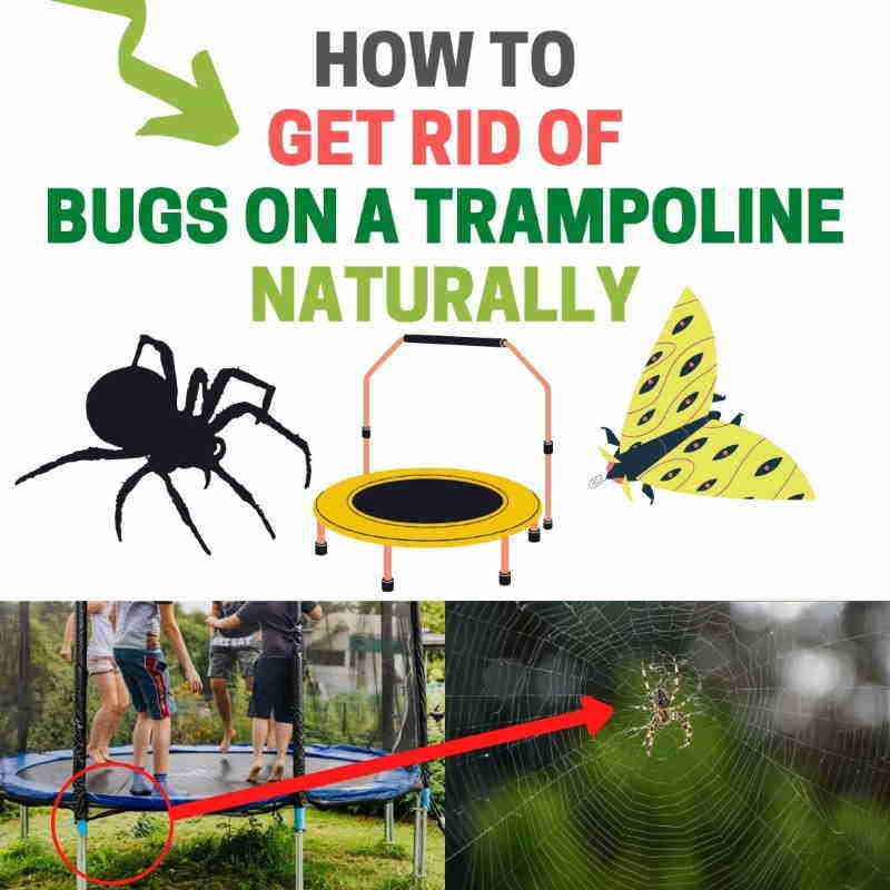 Get rid of bugs on trampoline.
