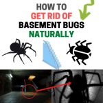 How to Get Rid of Bugs in the Basement (Naturally)