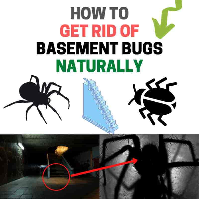 Get rid of bugs in the basement naturally DIY.