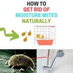 How to Get Rid of Mites in the Bathroom Naturally (Psocid Mites)