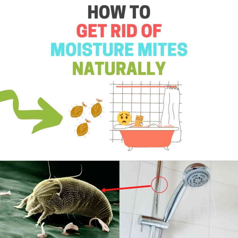 How to get rid of bathroom mites.