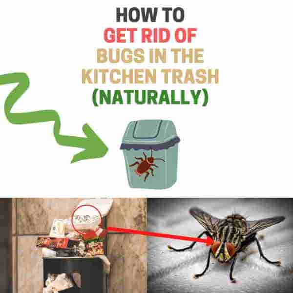 Keep bugs out of kitchen trash can.